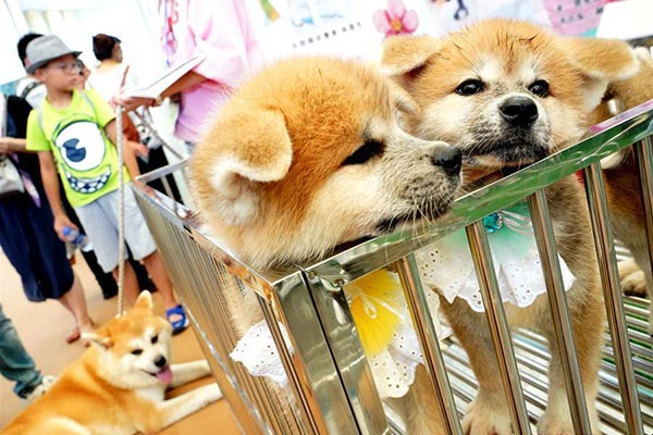 Товары для домашних животных из Китая